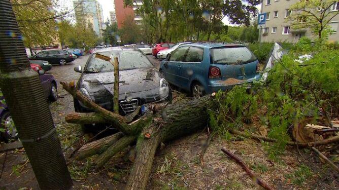 Wichura w Poznaniu. <br />Drzewa spadły na samochody